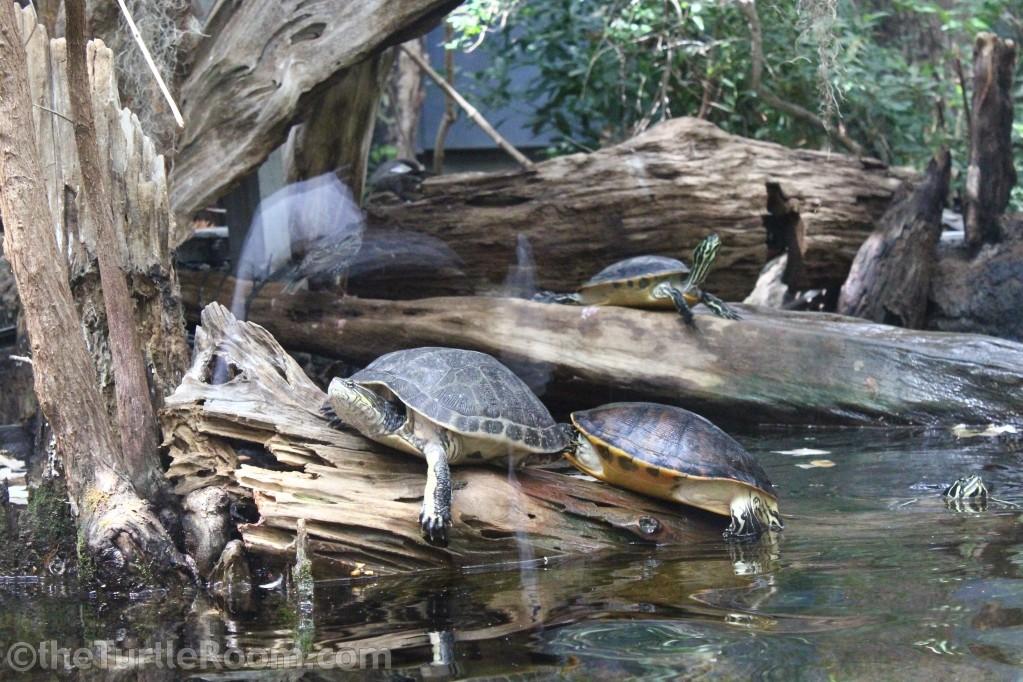 Tennessee Aquarium, April 21, 2011