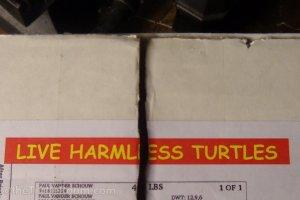 Turtle Shipment