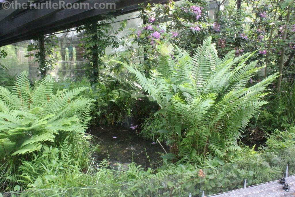 Glyptemys muhlenbergii (Bog Turtle) Habitat