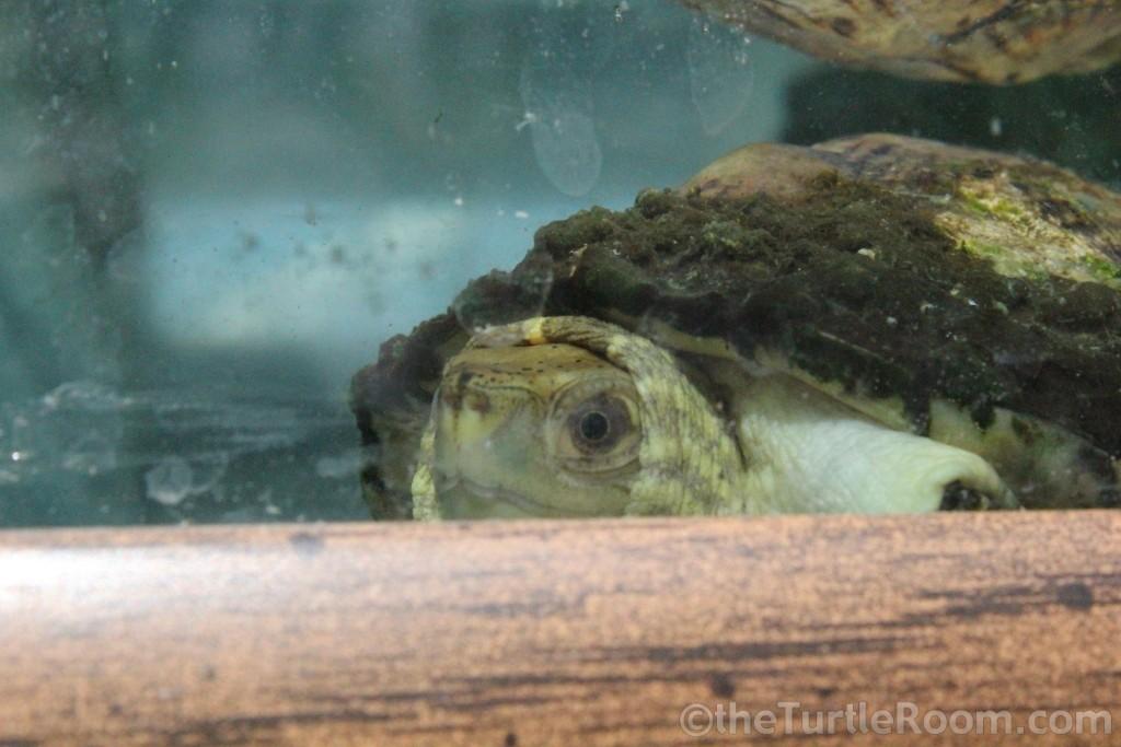 Tennessee Aquarium, May 20, 2013