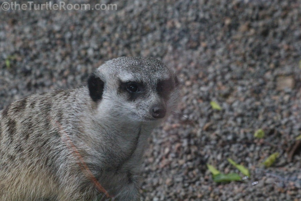 Knoxville Zoo, May 21, 2013