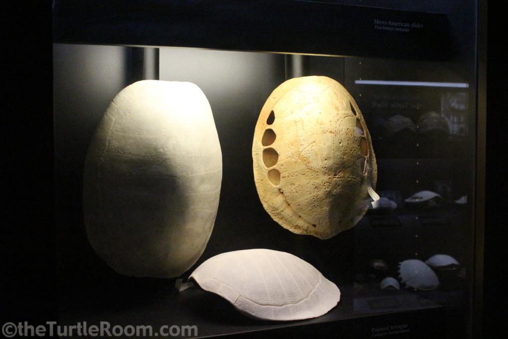 Assorted Shell Skeletons