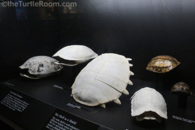 Assorted Skeletons and Preserved Shells