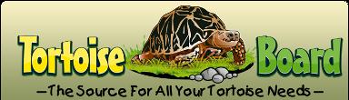 Tortoise Board