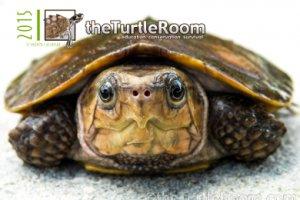 theTurtleRoom 2015 Turtle Calendar