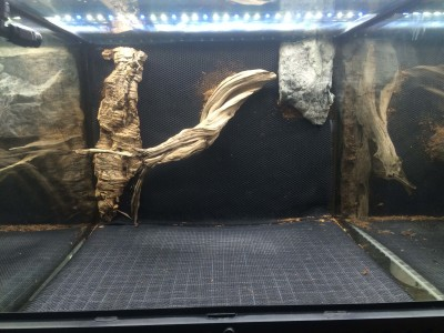 Vivarium Live Background