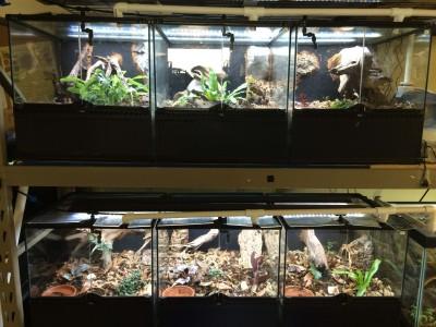 Custom vivariums designed by Joe of theTurtleRoom for Geoemyda spengleri (Vietnamese Black-Breasted Leaf Turtle)