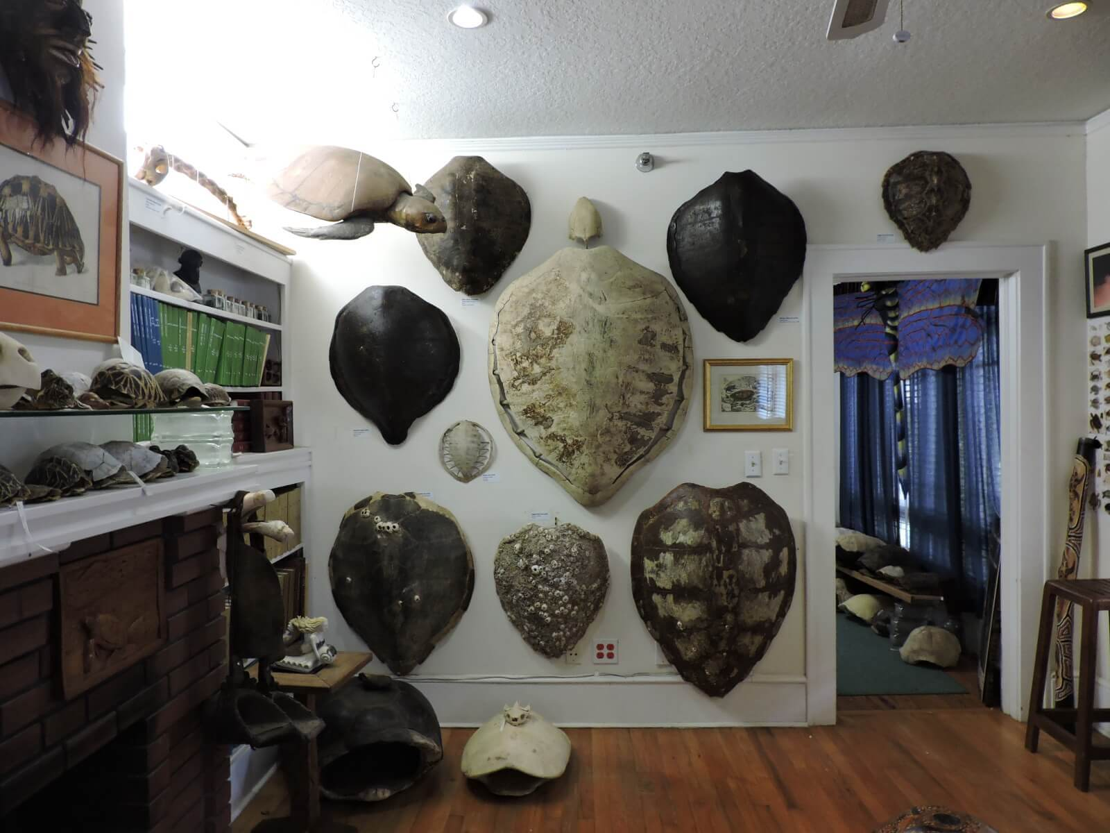 Chelonian Research Institute