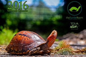 theTurtleRoom 2016 Turtle Calendar