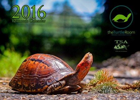 2016 Turtle Calendar Cover