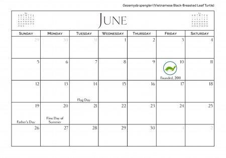 2016 Turtle Calendar - June