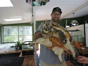 Anthony holding a very large Macrochelys temminckii (Alligator Snapping Turtle)