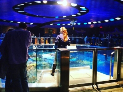 Amanda Sargent educating visitors to the New England Aquarium about Sea Turtle conservation
