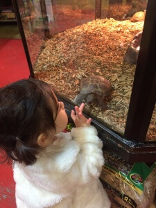 Anthony's daughter checking out a Russian Tortoise