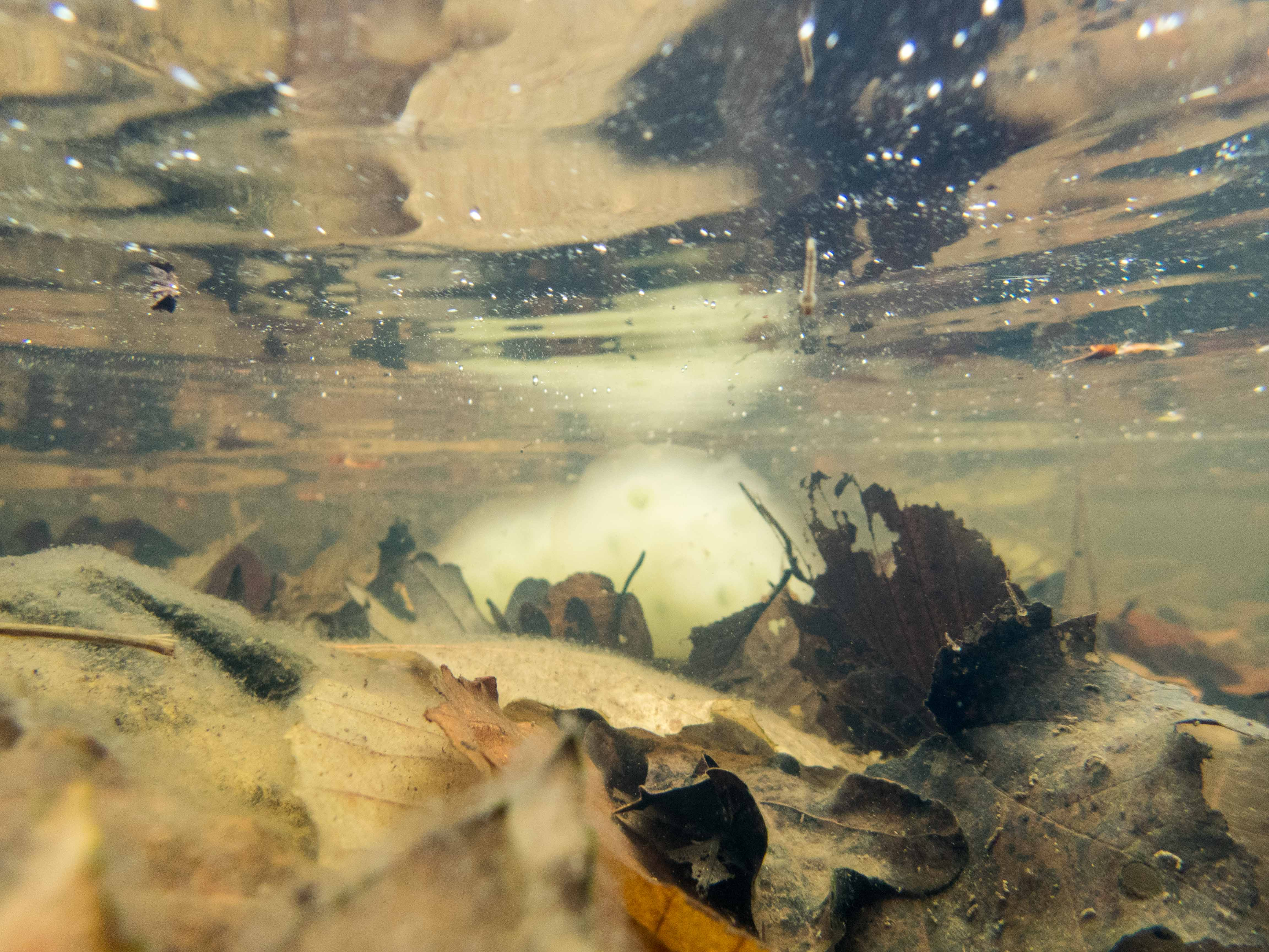 tTR/NAFTRG Wood Turtle Monitoring, April 22-24, 2016