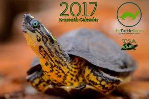 theTurtleRoom 2017 Turtle Calendar