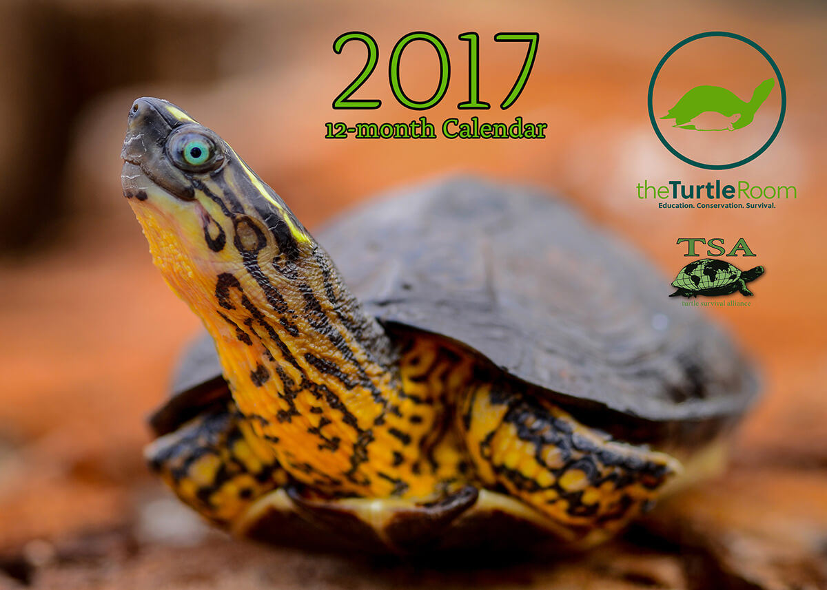2017 Turtle and Tortoise Calendar Cover Image - theTurtleRoom