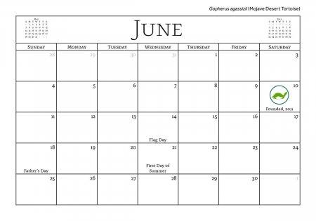 2017 Turtle and Tortoise Calendar, June - theTurtleRoom