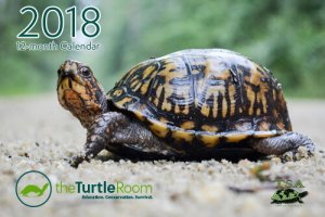 theTurtleRoom 2018 Turtle Calendar