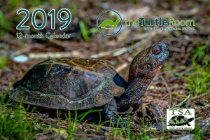 theTurtleRoom 2019 Turtle Calendar
