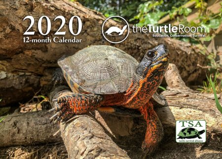 2020 theTurtleRoom Calendar Cover Image
