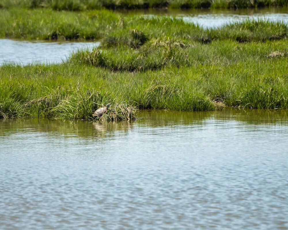 Habitat in southeast New Jersey