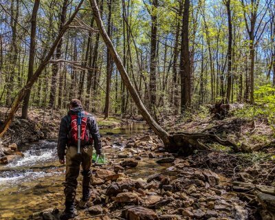 Andy Weber searches for wood turtles in a stream