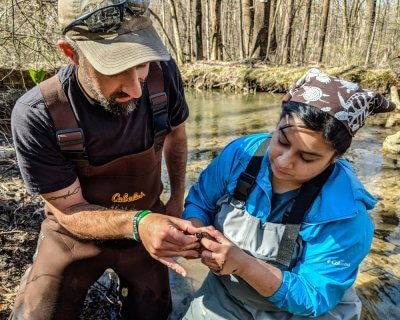 Chris Bortz and Viviana Ricardez gently holding a small wood turtle to take head measurements