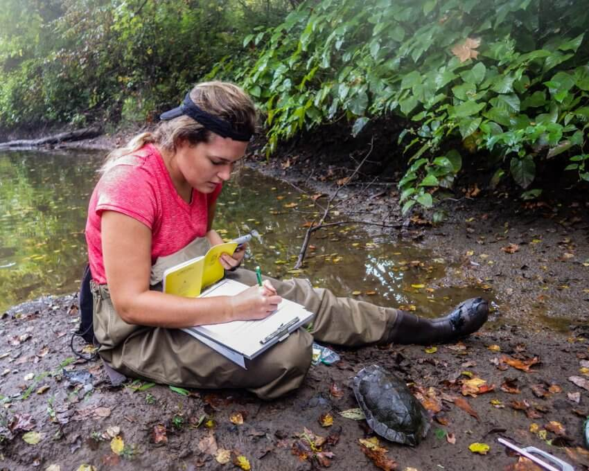 Ayla Ross filling out data sheets during Wood Turtle research