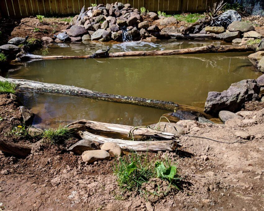 Completed turtle pond.