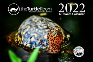 2022 theTurtleRoom Calendar Cover